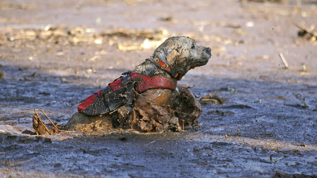 A cadaver dog swims through mud and debris during a search for the re