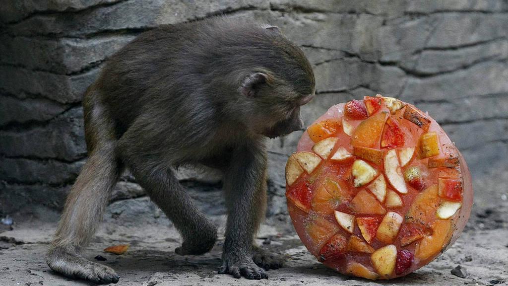 ANIMALES DE ZOOL?GICO DE CALI RECIBEN HELADOS PARA MITIGAR OLA DE CALOR