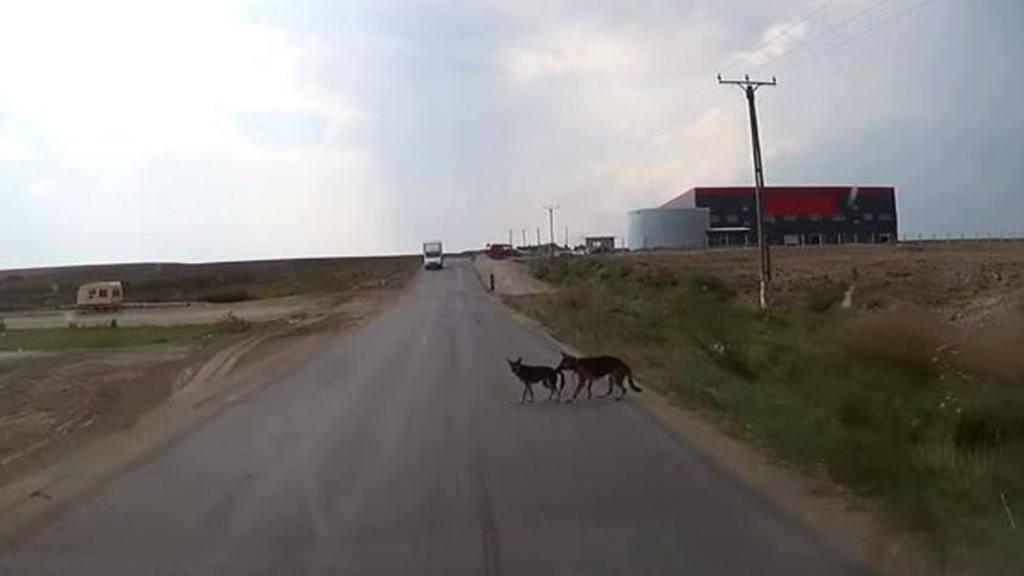 Perro salva a un amigo