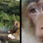 Arrojan bolsa de papas con cohete oculto a mono y muere