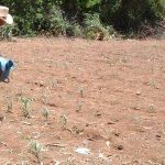 Las condiciones climáticas han llevado al sector agrícola a enfrentar dificultades para mejorar la producción.