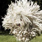 Bestia, la mascota de Mark Zuckerberg es sensación en Internet