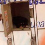 Hombre guardó cachorro en locker de supermercado mientras compraba