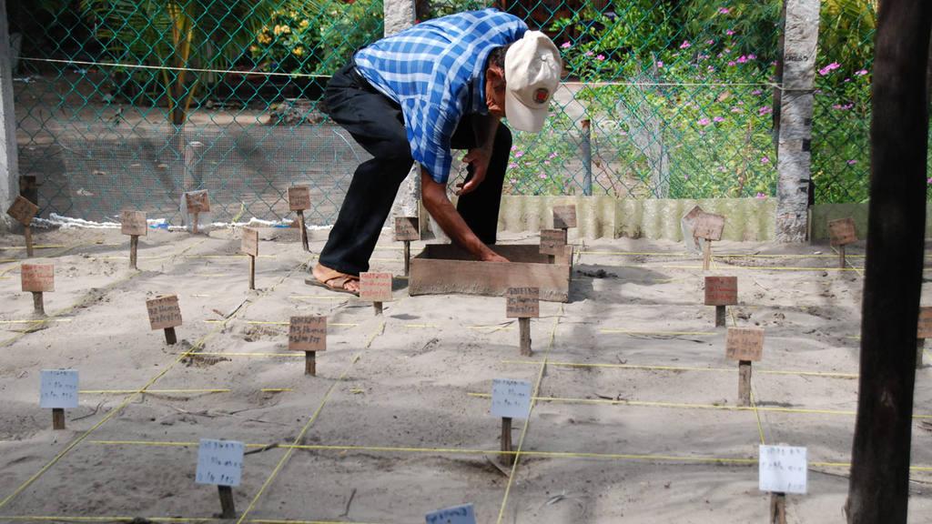 Liberación de tortugas en el Tamarindo
