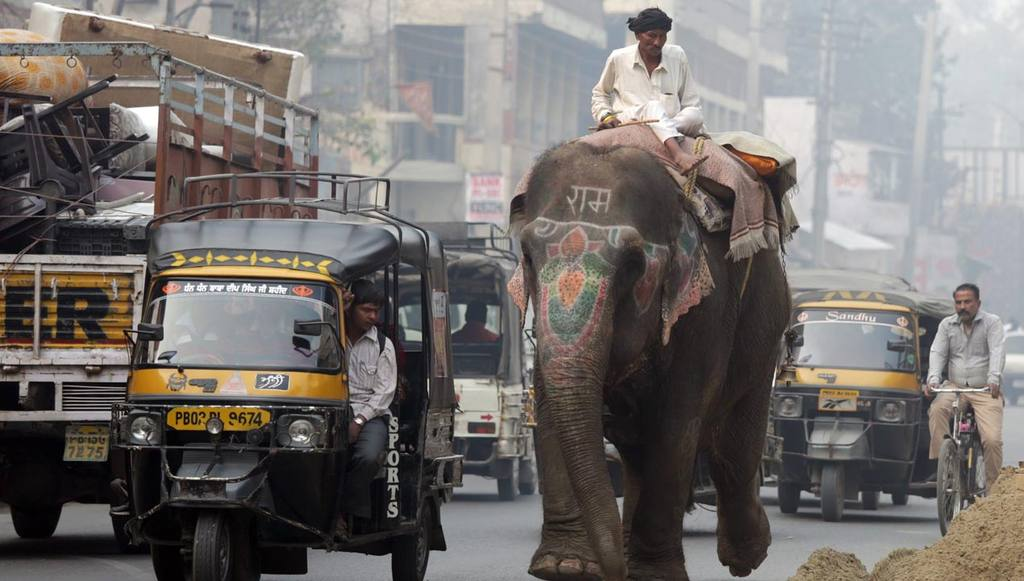 A mahout rides on an elephant in the Indian city of Amritsar