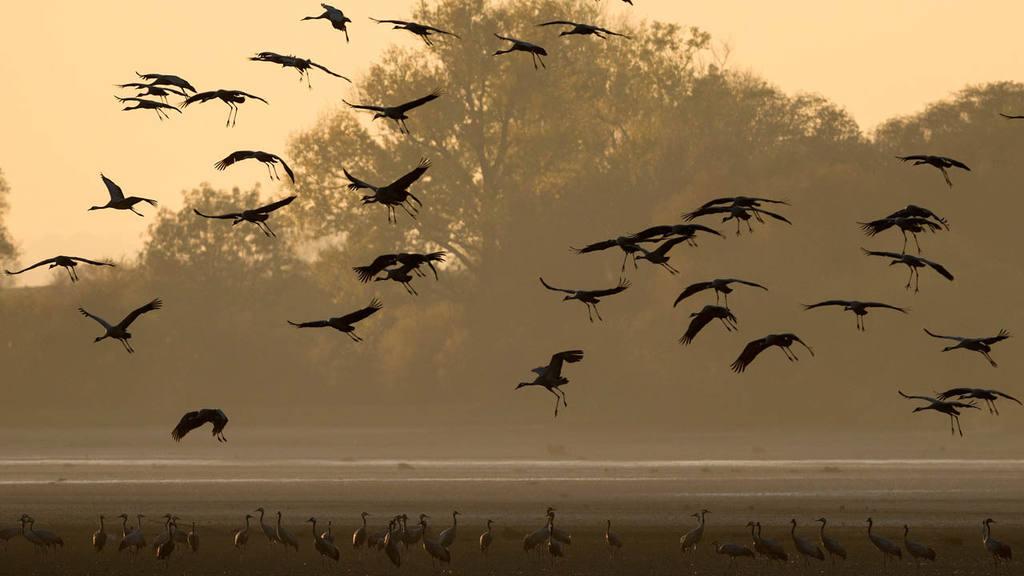 Migración de grúas
