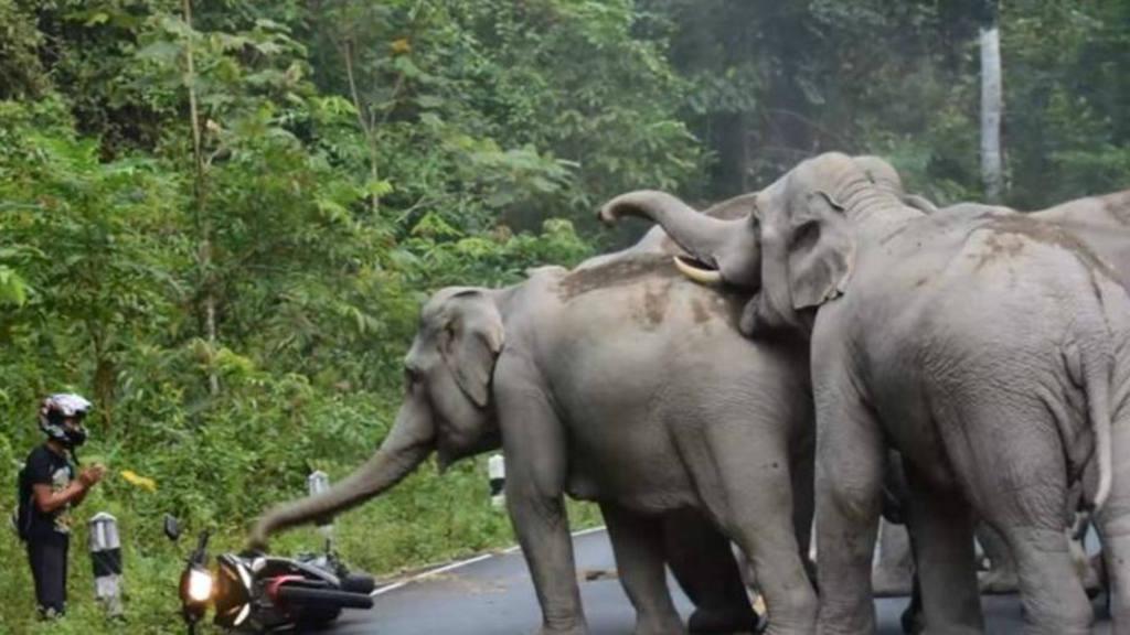 Elefantes se enloquecen con ruido de una motocicleta