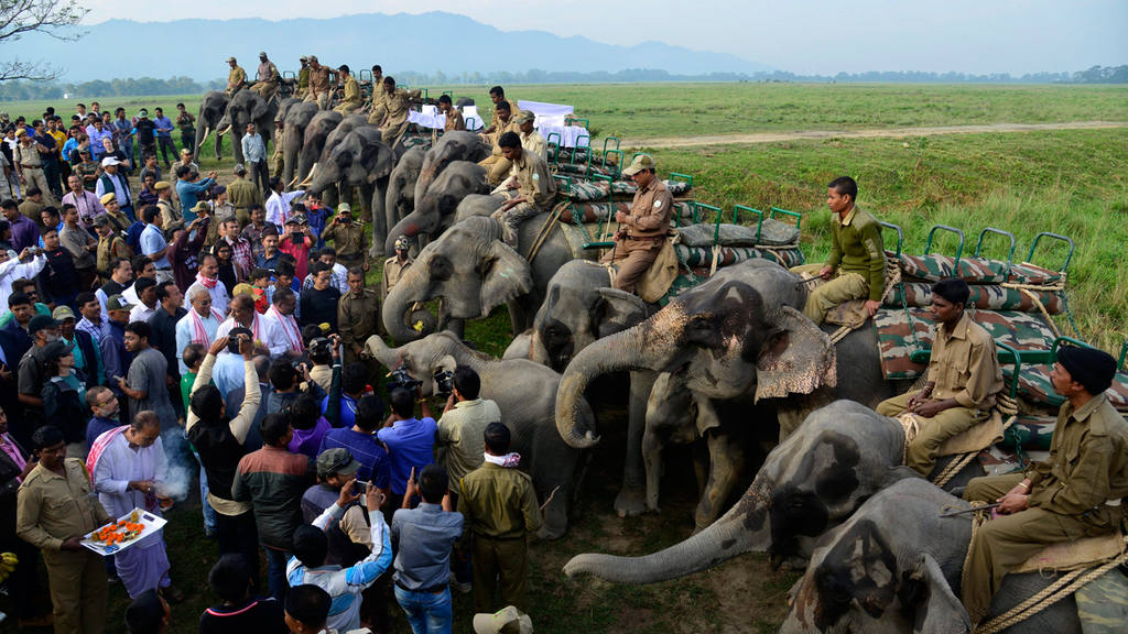 First day of reopening of Kaziranga National park in Assam, India,
