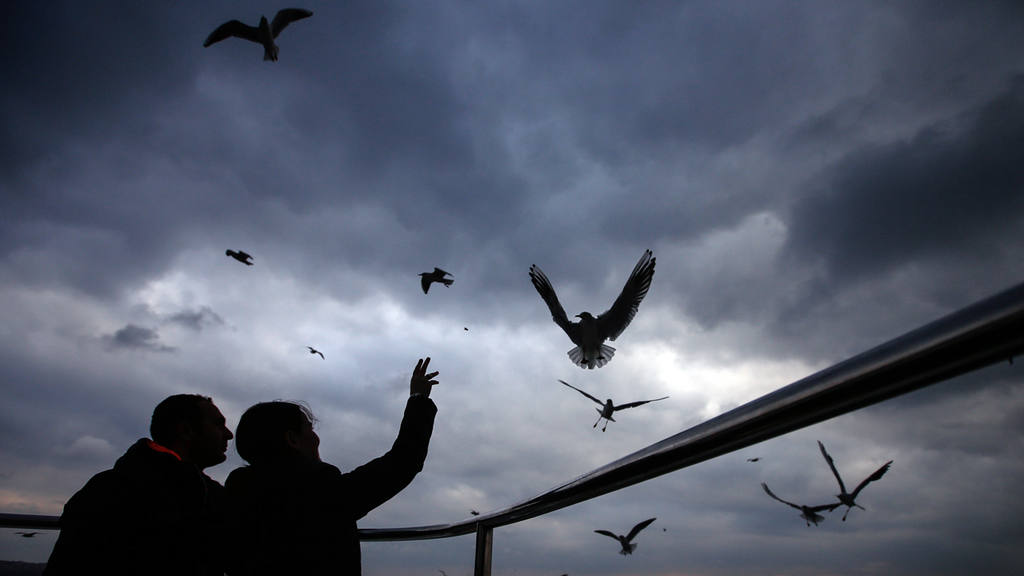 A woman throws a piece of bread toward seagulls as she travels over t