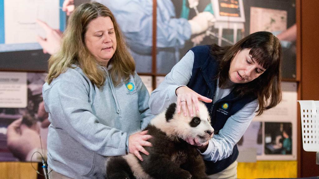 Bei Bei cachorro de panda gigante