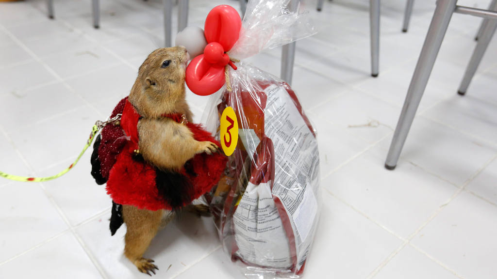 Thais love of exotic pets