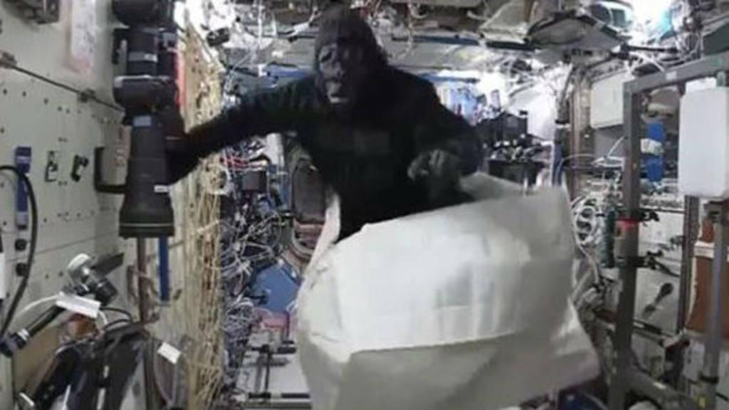 La broma del gorila