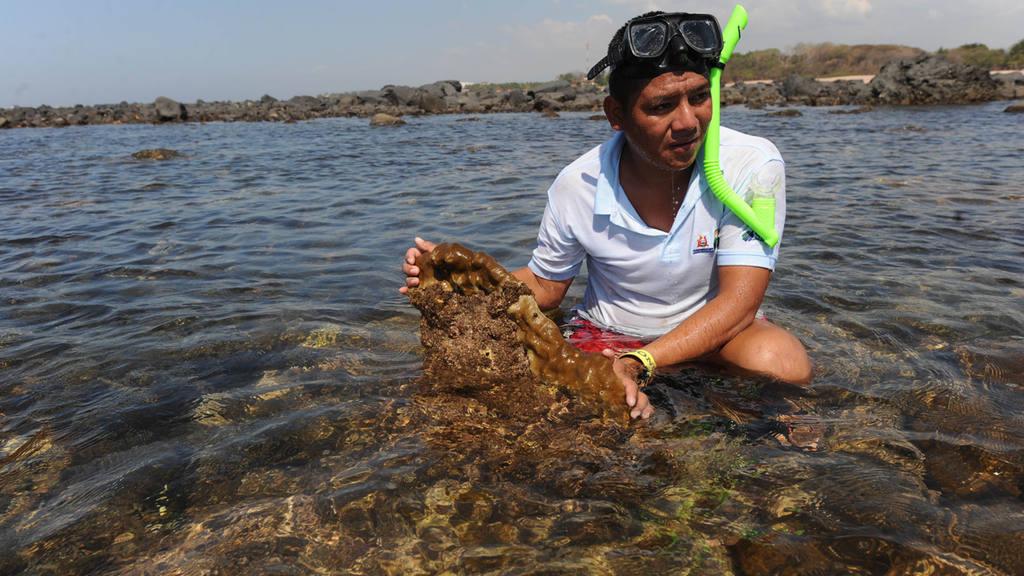 corales Los Cóbanos