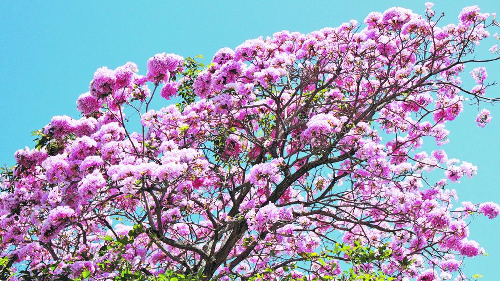 plante rboles que suman a sus beneficios la floraci n
