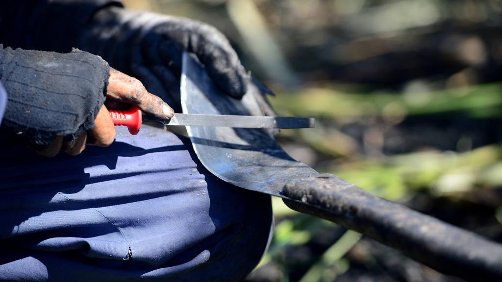 Cortadores de caña con nuevas técnicas agrícolas