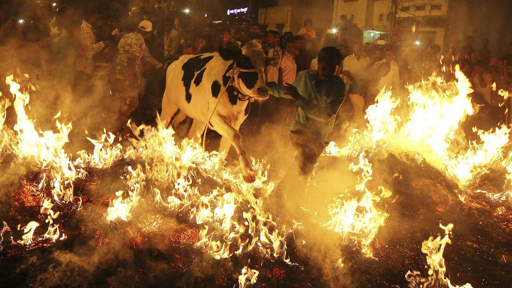 FESTIVAL PONGAL EN LA INDIA