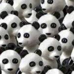 Encuentra al perro entre los pandas.