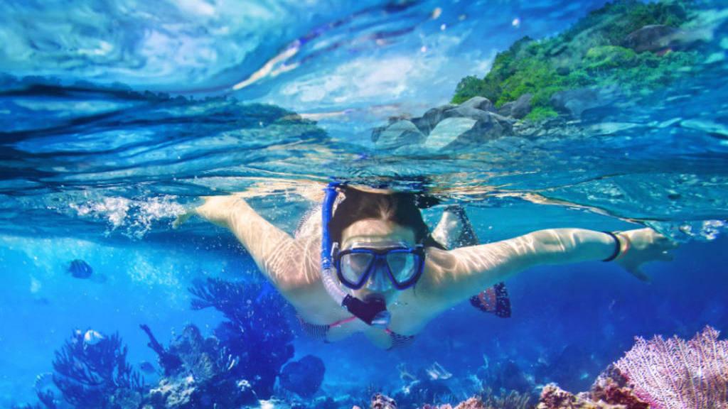 La vida marina a través del snorkeling