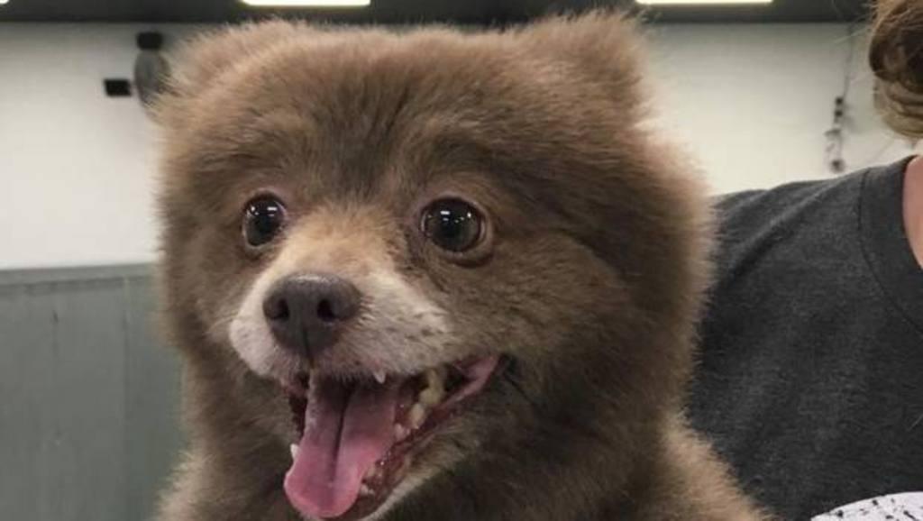 ¿Es un oso o un perro?