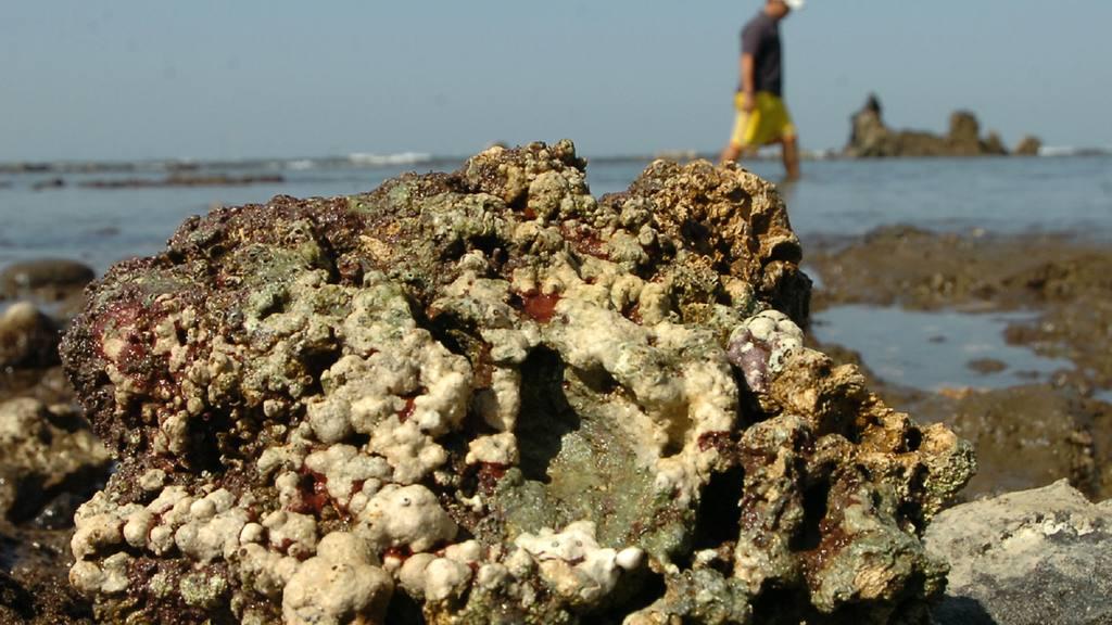 Agonizan corales de Los Cóbanos