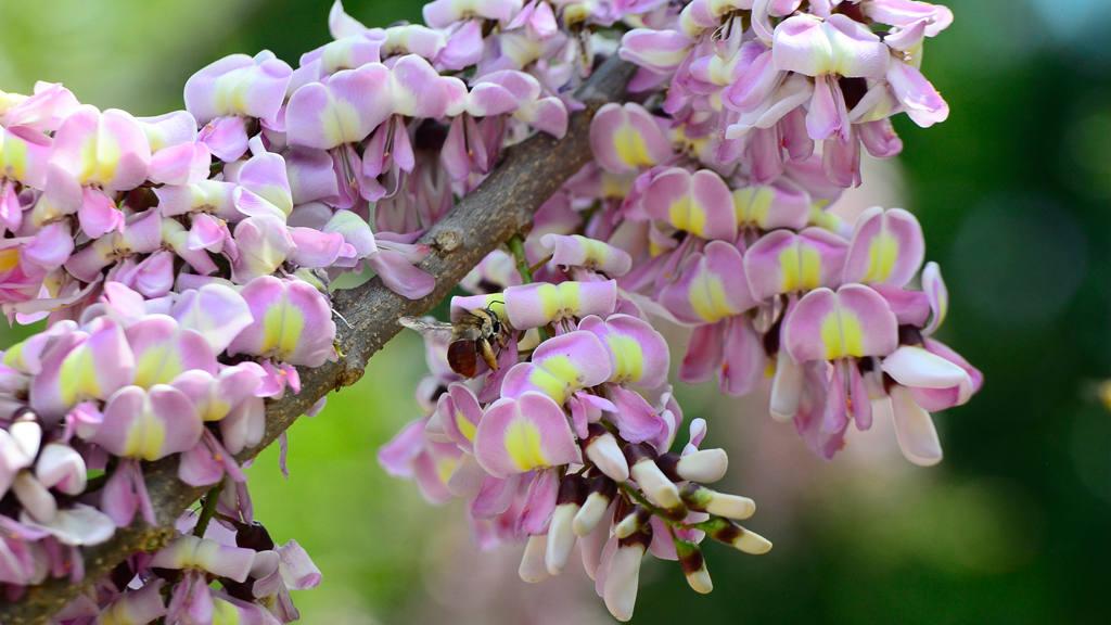 .La primavera salvadoreña