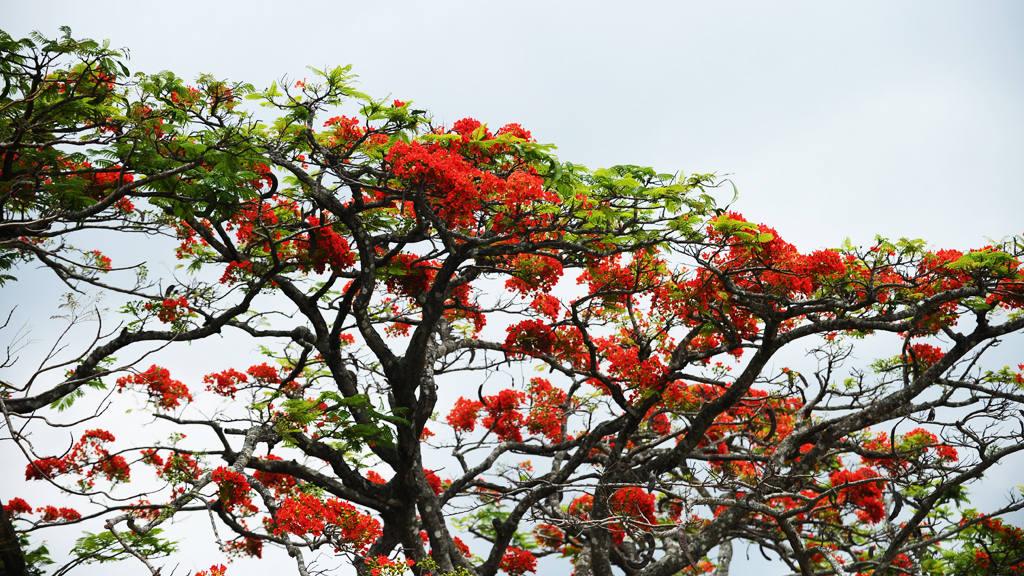 La primavera salvadoreña