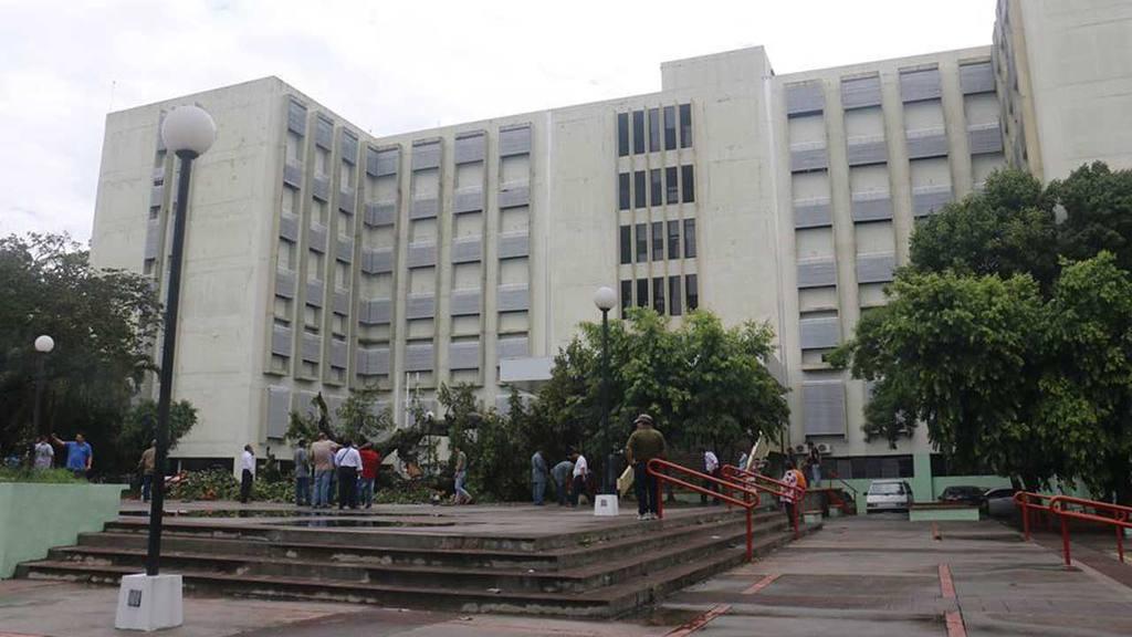 Árbol de amate se derrumba en la Universidad Nacional
