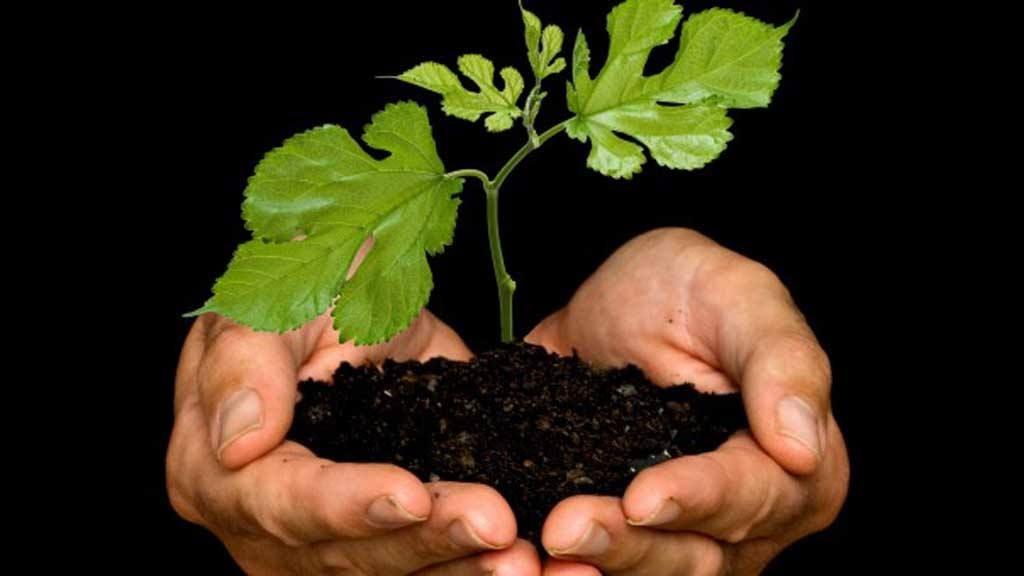 la mejor forma de recuperar el ambiente es sembrar rboles