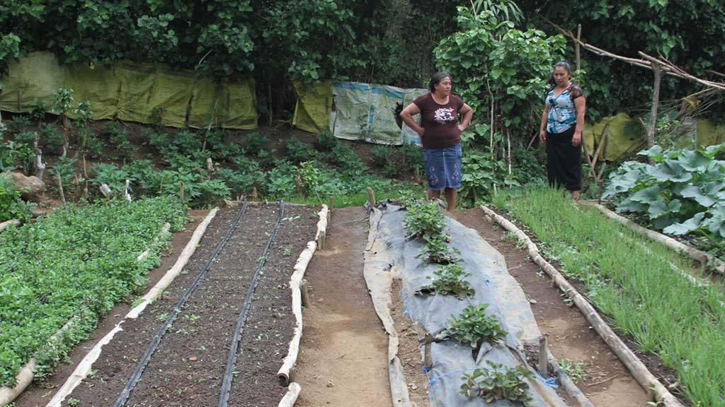 Huertos caseros como cultivar tomates en su huerto casero - Como cultivar un huerto ...