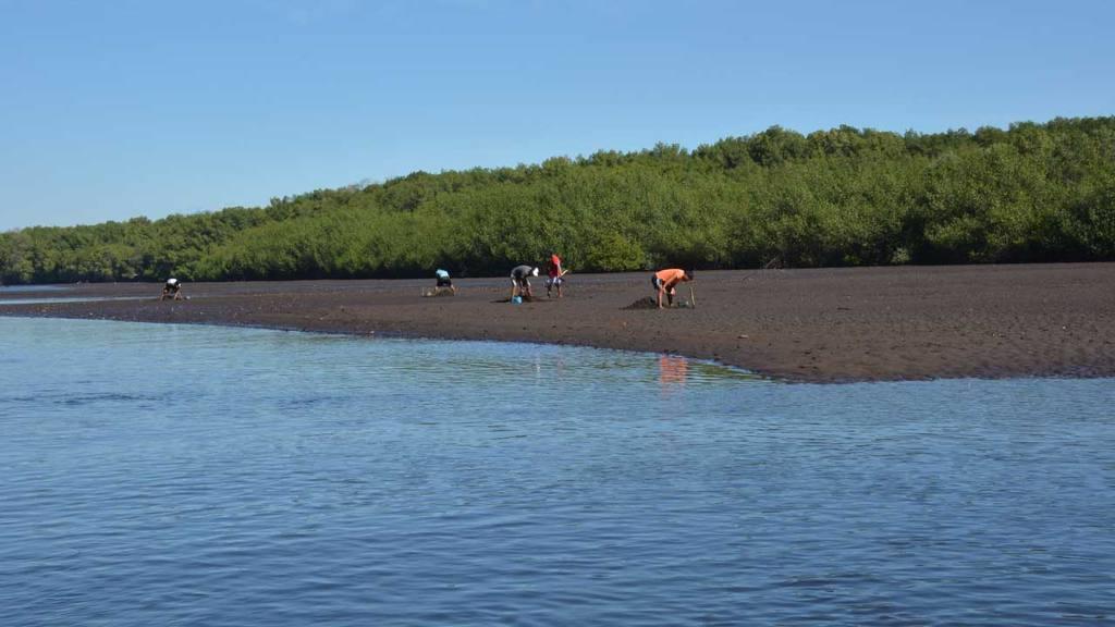 Mejorará la biodiversidad en la Barra de Santiago