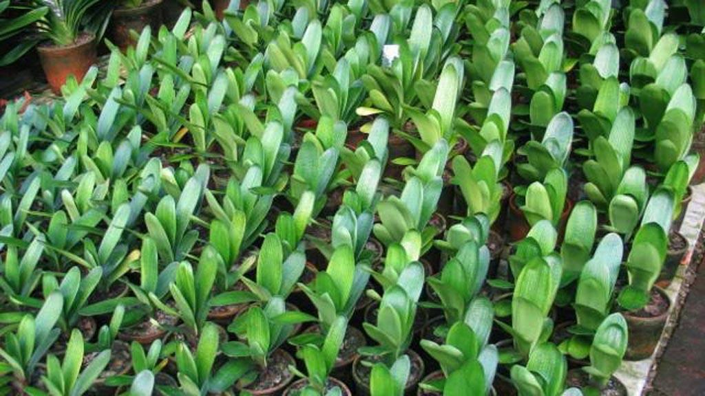 Hay plantas y rboles que no necesitan de mucha agua for Jardines que necesitan poca agua