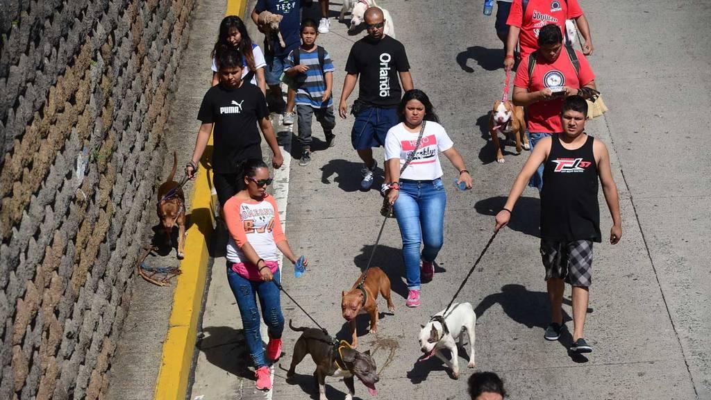 Caminata caninos