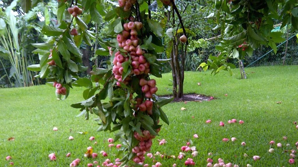 Verdades y erroressobre el cultivo de rboles y plantas - Cuando se plantan los arboles frutales ...