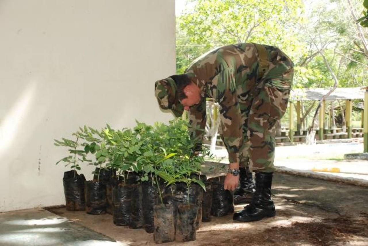 Los ejemplares que serán plantados son parte del vivero que mantiene la guarnición militar. Foto EDH / insy mendoza