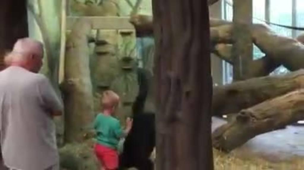 Niño juega a las escondidas con un gorila en zoo de EE.UU.