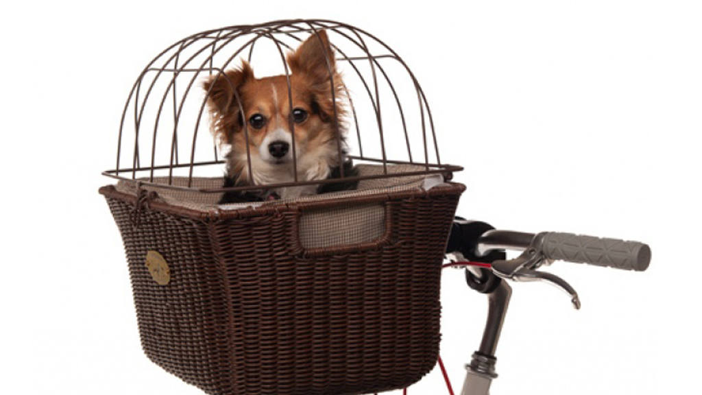 Tu perro en bicicleta
