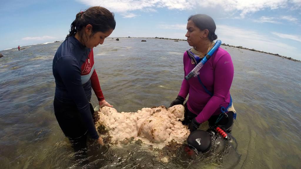 Los Cóbanos es un área natural con mucha riqueza para el país, pero que urge de mayor protección y restauración.