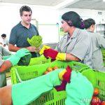 Súper Selectos hace un acercamiento con los agricultores de Miramundo