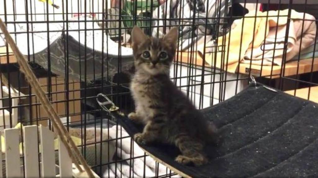 Tras el largo rescate, el gatito fue llamado Piper.