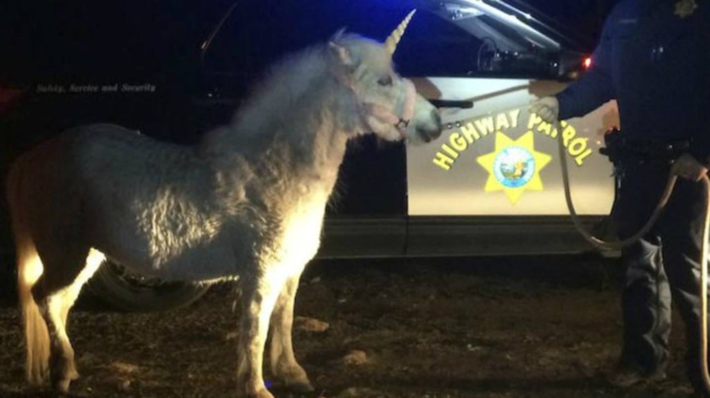 "Atrapan un ""unicornio"" en California"