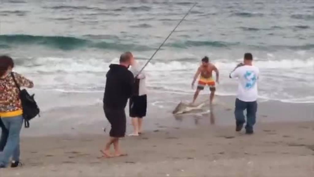 Hombre saca del mar a un tiburón bebé para tomarse fotos