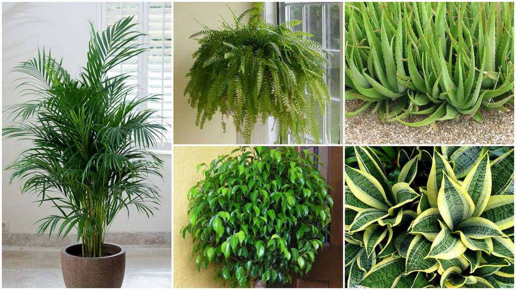 5 plantas que te ayudar n a dormir mejor for Plantas de interior muy duraderas