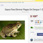Sitios de venta online aparecieron usuarios sofreciendo ranas y sapos como alternativa a repelentes e insecticidas.
