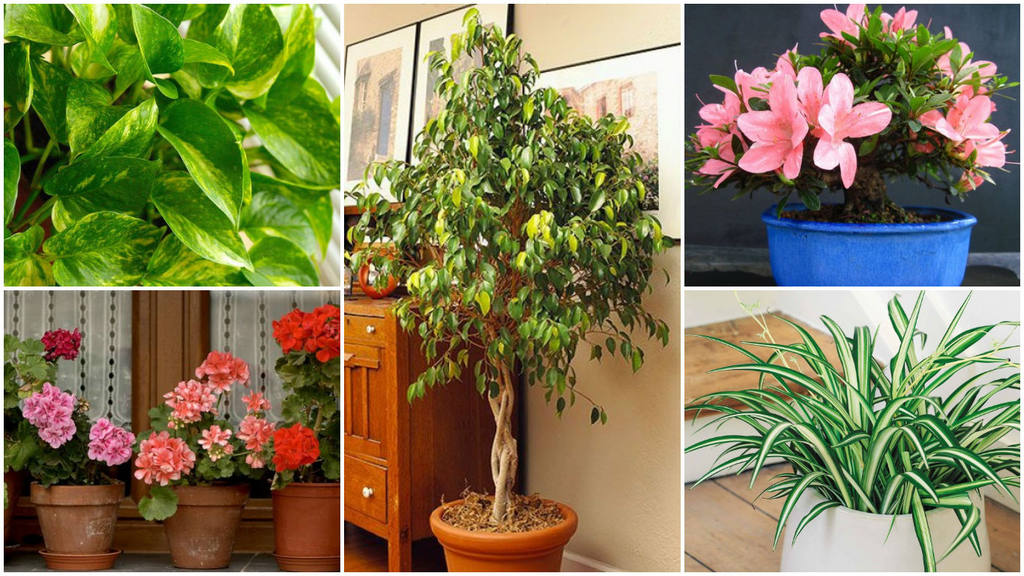 10 plantas que purifican el interior de tu hogar for Plantas decorativas de interior