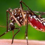 Infectólogos urgen a las autoridades de Salud y a la población a reforzar todas las acciones para combatir al zancudo Aedes aegypti.