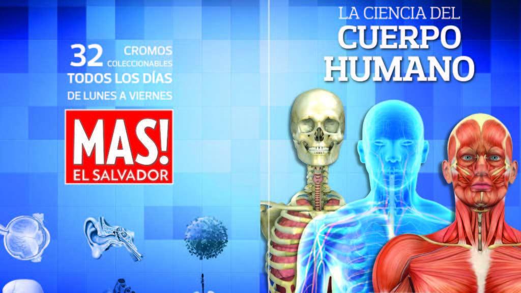 Aprende todo sobre el cuerpo humano con periódico MAS! | elsalvador.com