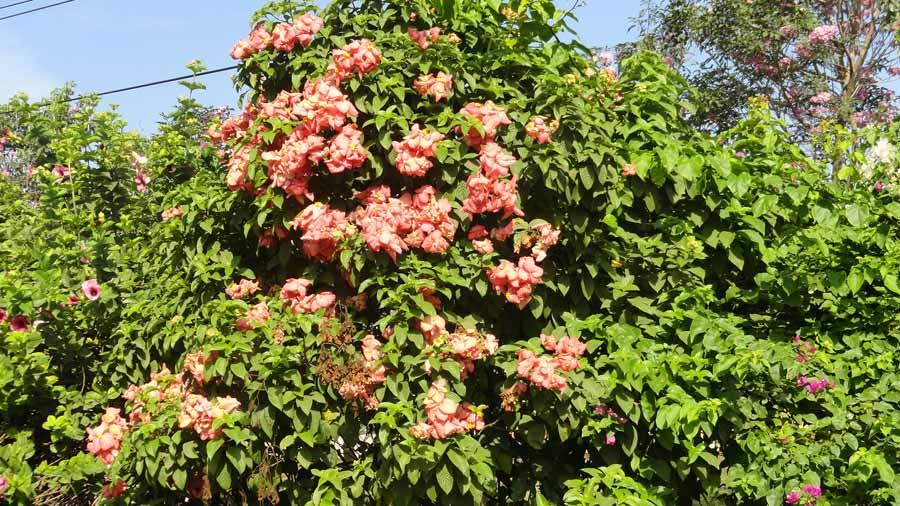 Hay plantas ornamentales para cualquier sitio for Una planta ornamental