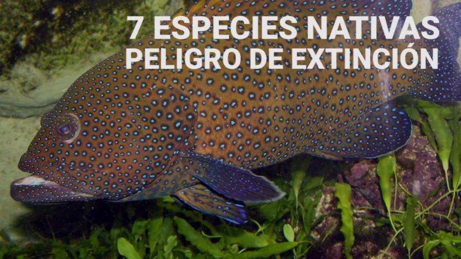 7 especies nativas en peligro de extinción elsalvador.com
