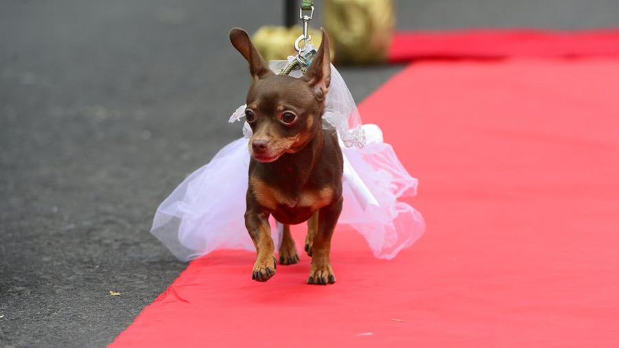 Desfile-de-perros_01