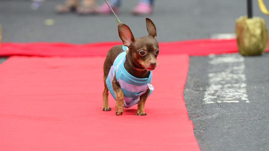 Desfile-de-perros_03